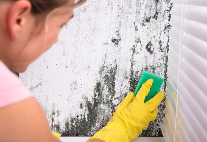 How-Do-You-Get-Rid-of-Mould-on-Walls