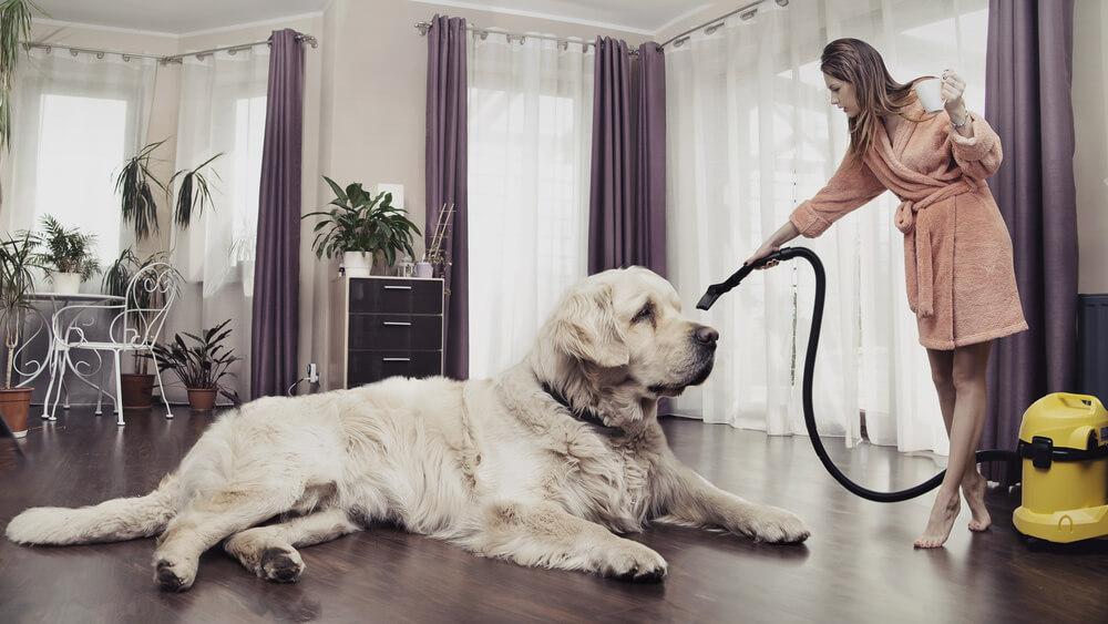 Make a Clean Sweep