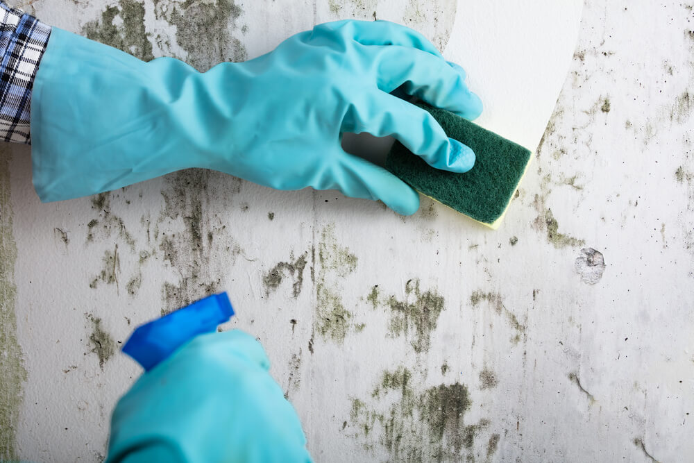 How to Remove Stains Off Painted Walls