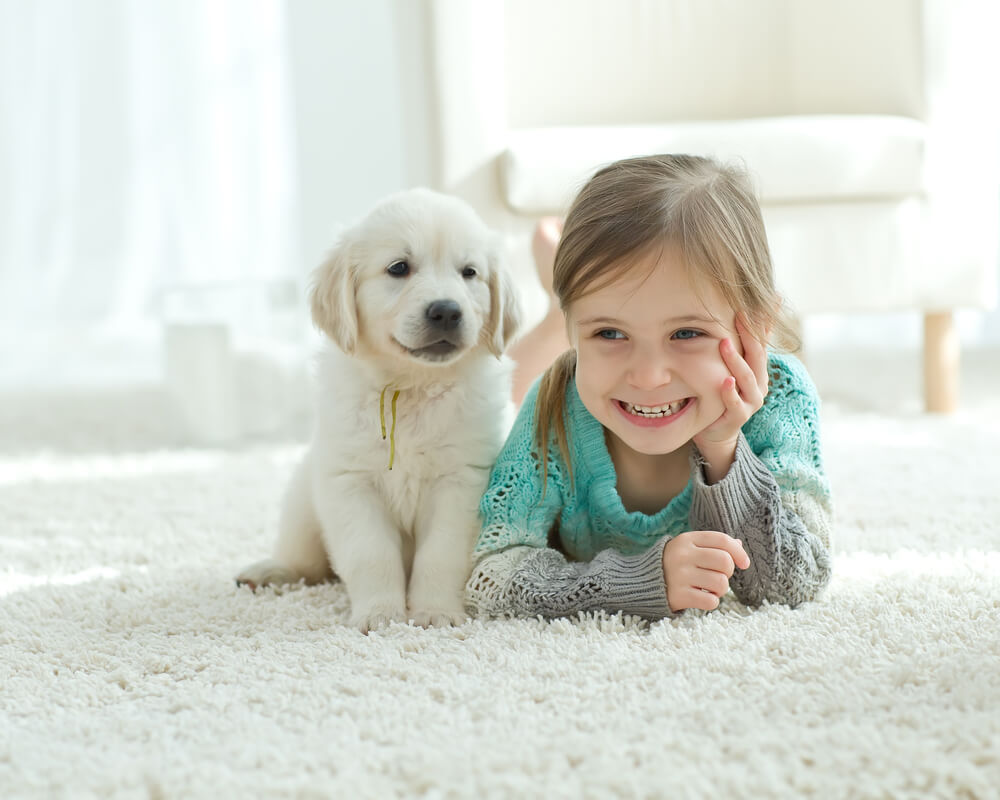 Carpet Cleaning Tips and Maintenance